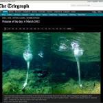 Swan_Telegraph