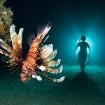 Farewell to Lionfish