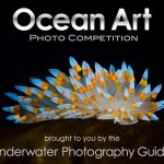 Ocean Art Competition 2013